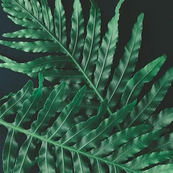 Kreatywny układ wykonany z tropikalnych kwiatów i liści