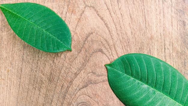 Kreatywny układ wykonany z tropikalnych liści na drewnianym tle minimalistyczna koncepcja z miejscem na kopię