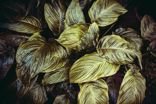 Kreatywny układ wykonany z zielonych liści. leżał płasko, natura