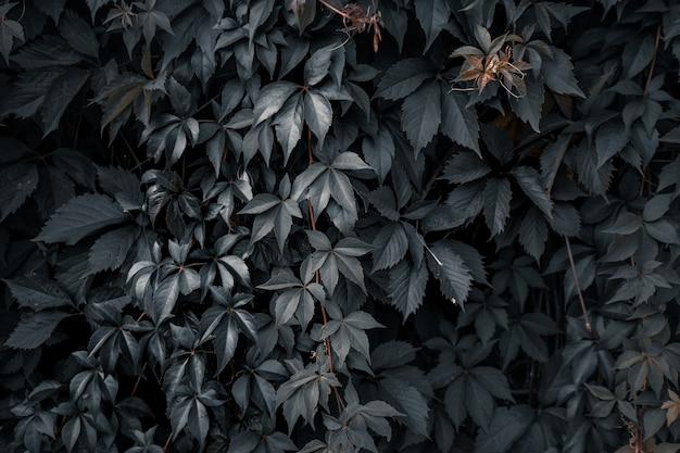 Kreatywny układ wykonany z zielonych liści