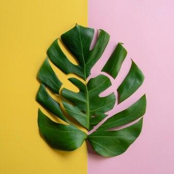 Kreatywny układ z wyciętymi liśćmi monstera na pastelowym różowym i żółtym tle w kształcie serca