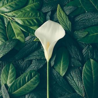 Kreatywny układ złożony z zielonych liści i białego kwiatu