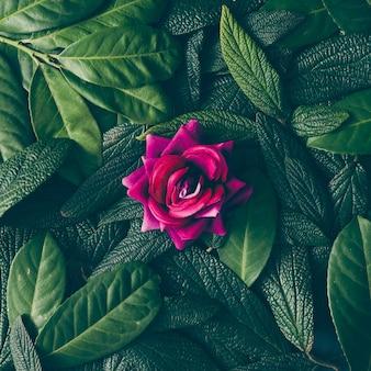 Kreatywny układ złożony z zielonych liści i fioletowego kwiatu