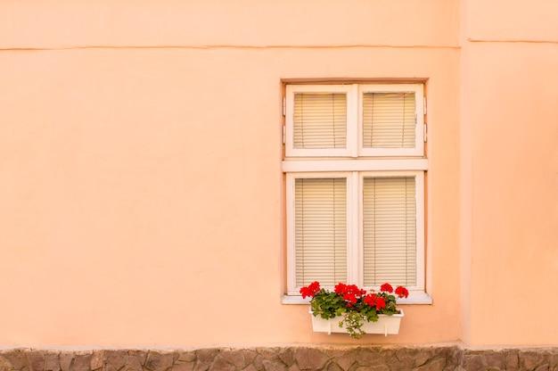 Kremowa ściana z oknem i kwiatami
