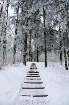 Kręta aleja w zimowym lesie