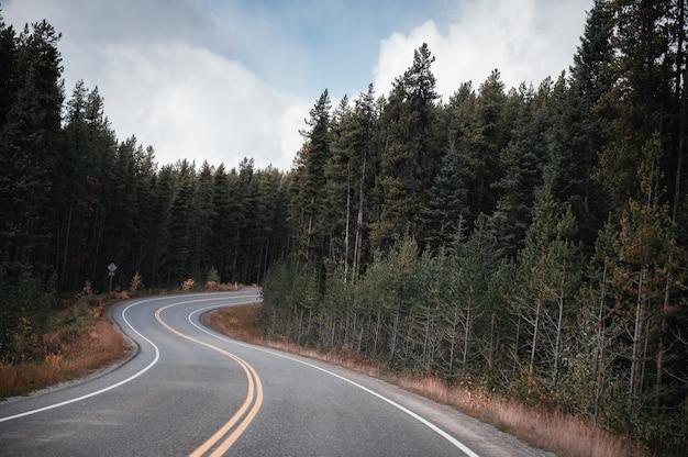 Kręta asfaltowa droga przez las sosnowy jesienią w parku narodowym banff
