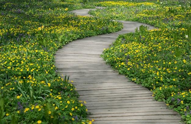 Kręta drewniana ścieżka w ogrodzie wśród zielonych trawników