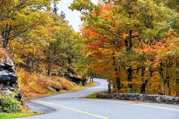 Kręta droga w lesie