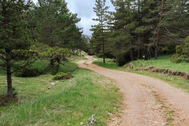 Kręta górska droga gruntowa między drzewami w lesie