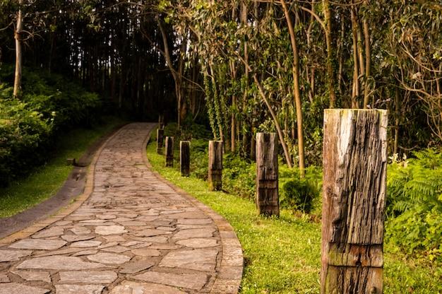 Kręta kamienna droga przez słoneczny zielony las oświetlony promieniami słonecznymi.
