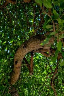 Kręte drzewo na wybrzeżu morza czarnego kurort sewastopol