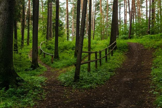 Kręte polne ścieżki z poręczą w pagórkowatym lesie