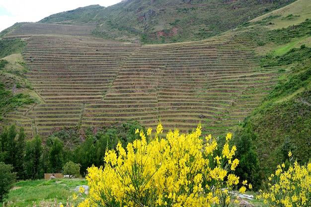 Kroczący rolniczy tarasy na zboczu góry święta dolina incas, cuzco, peru