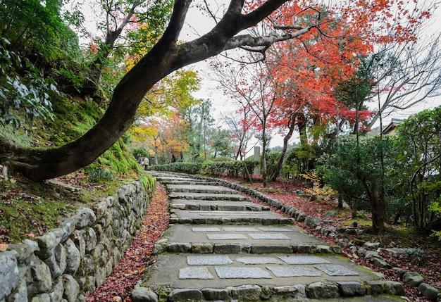 Kroki prowadzące z jesiennymi kolorowymi liśćmi w arashiyama, kioto, japonia