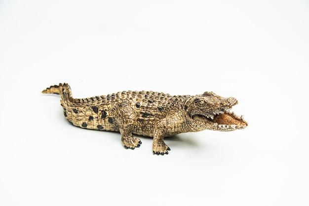 Krokodyl na białym tle
