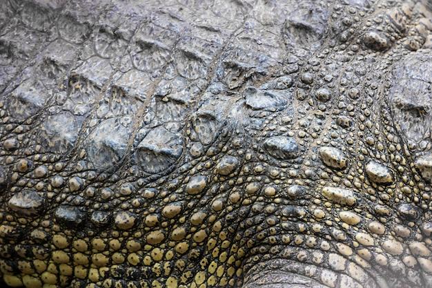 Krokodyl syjamski delta mekongu w wietnamie
