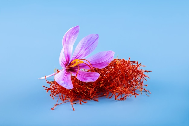 Krokus kwiat i suszona przyprawa szafranu na białym tle na niebieskim tle.