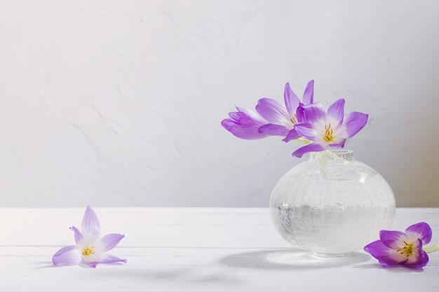 Krokus na szklanym wazonie na białym tle