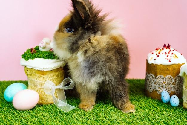 Króliczek wielkanocny z kolorowymi pastelowymi kolorowymi jajkami i słodkimi babeczkami oraz wielkanocnymi ciastami i świeżą trawą. koncepcja świąt wielkanocnych
