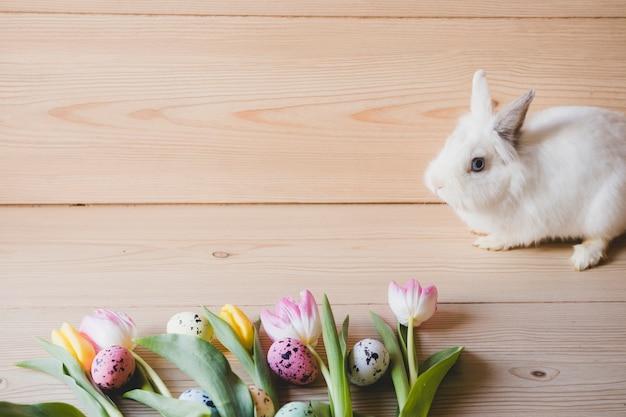 Królik blisko jajek i tulipanów