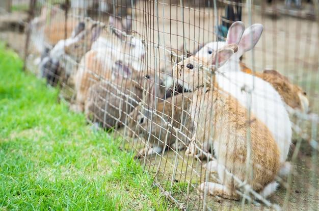 Królik i króliki zamknięte w ogrodzeniu z drutu.