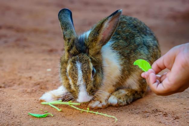 Królik jedzący jedzenie. króliki jedzą świeże warzywa