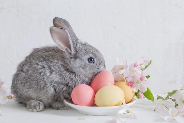 Królik z wielkanocnymi jajkami na biel ścianie
