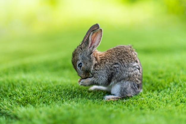 Króliki. ładny mały zajączek na łące. zielona trawa pod promieniami słońca. dwa króliki na zielonej trawie w letni dzień.