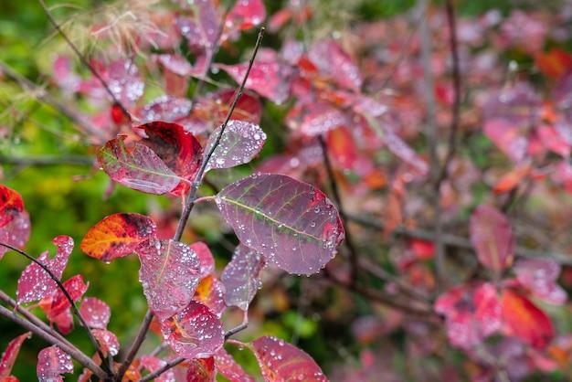 Kropelki wody na liściach drzew