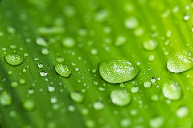 Kropelki wody na liściach kropla deszczu zielona pora deszczowa