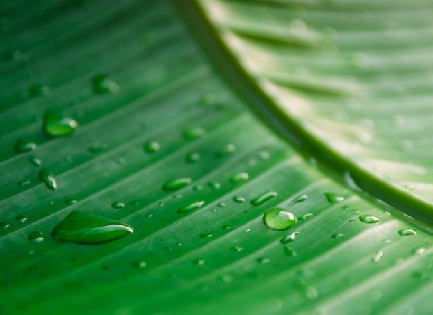 Kropelki wody na zielonych liściach natury