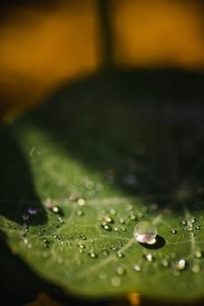 Kropelki wody na zielonym liściu