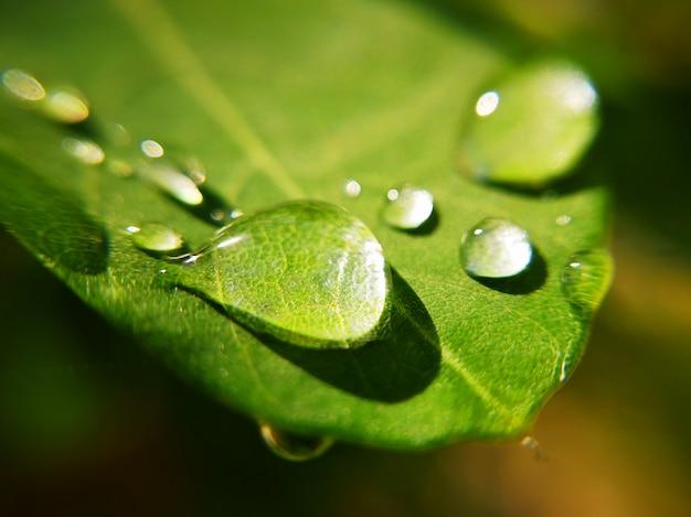 Kropelki wody z bliska na zielony liść