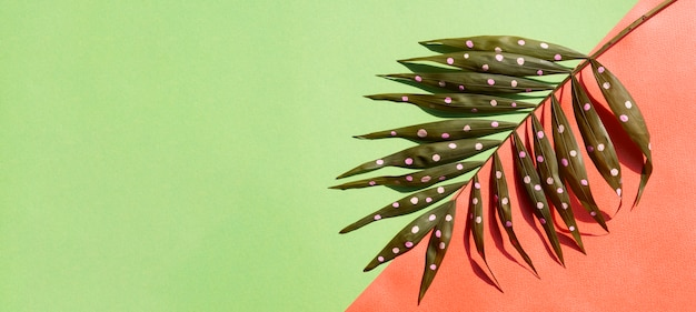 Kropkowani paprociowi liście z kopii przestrzeni tłem