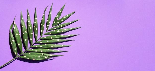 Kropkowany paprociowy liść z menchii kopii przestrzeni tłem