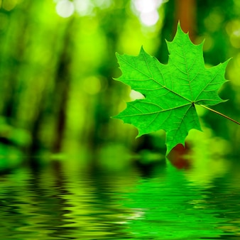 Kropla deszczu kapiąca do wody z liścia na białej powierzchni