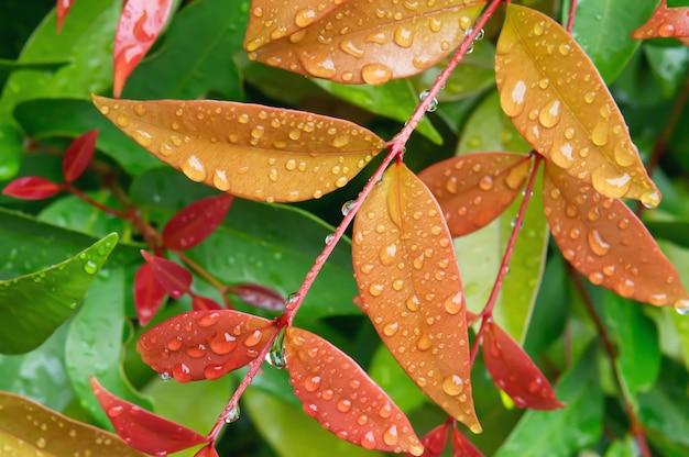 Kropla deszczu na liściu w tle przyrody