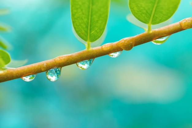 Kropla wody gałęzi drzewa.