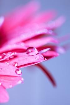 Kropla wody na różowym kwiatku na niebieskim tle