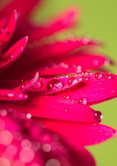 Kropla wody na różowym kwiecie na zielonym tle