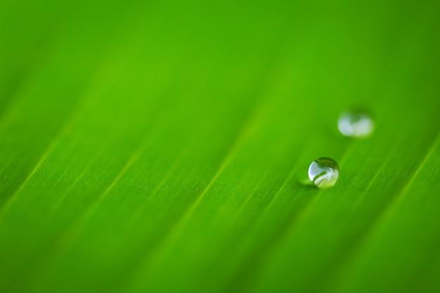 Kropla wody na tle zielonych liści bananowca