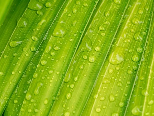 Kropla wody na zielony liść palmowy