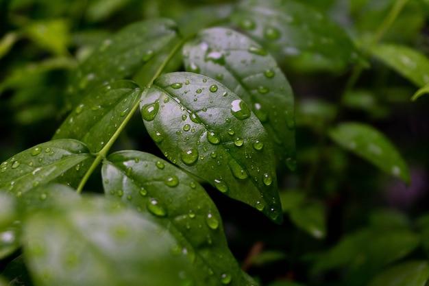 Kropla wody na zielonym liściu