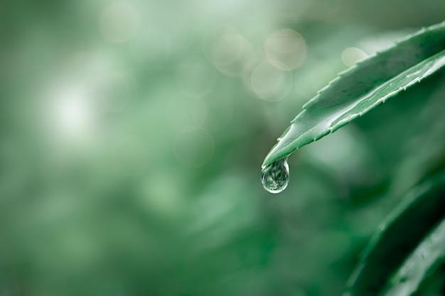 Kropla wody na zielonym tle liści