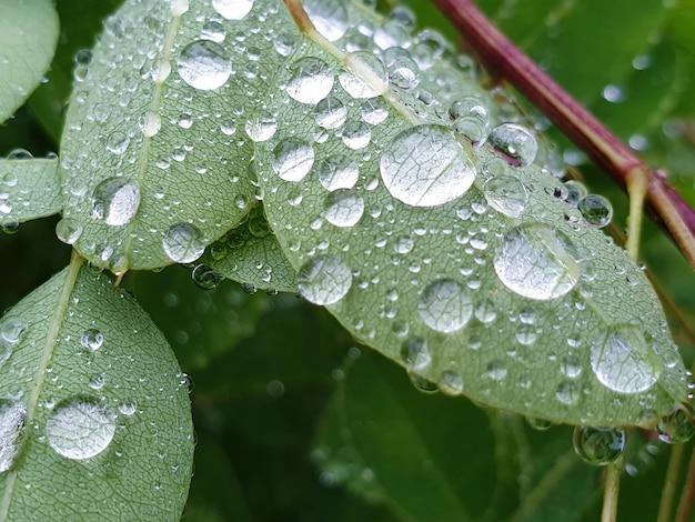Krople deszczu na liściach