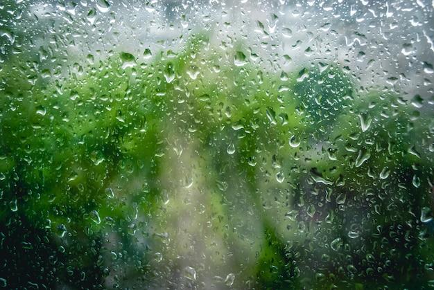 Krople deszczu na oknie i zielone drzewo w tle
