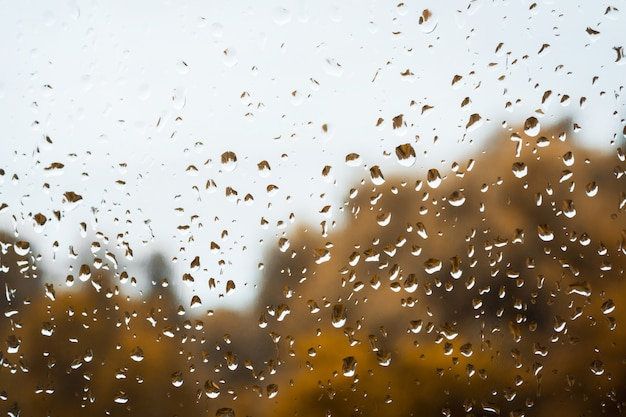 Krople deszczu na oknie na tle ponure deszczowe niebo i złote drzewa