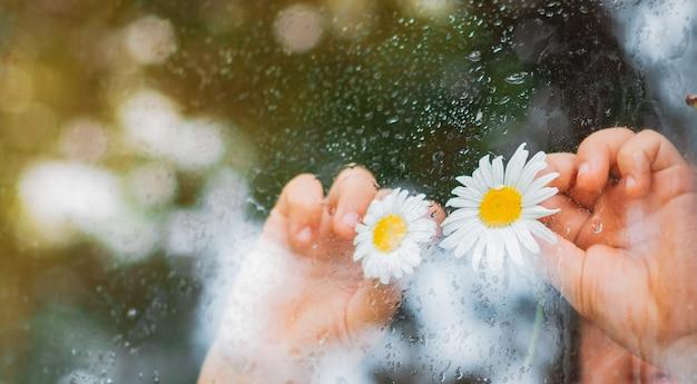 Krople deszczu na szybie wiejskiego okna, oczy z kwiatów rumianku w dłoniach dzieci patrzą na deszcz.