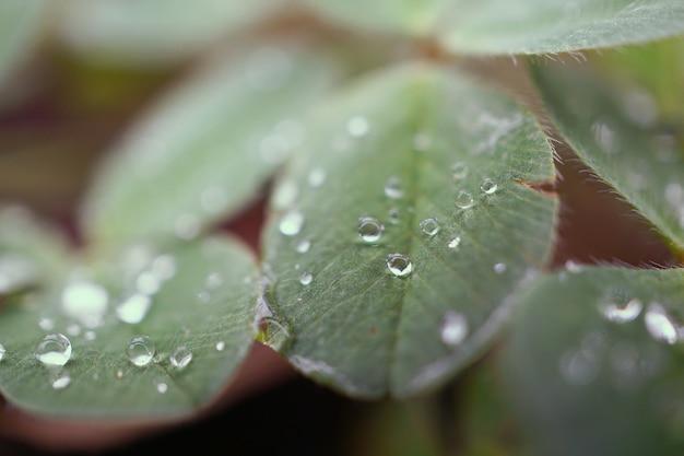 Krople deszczu na zielonych liściach roślin w ogrodzie