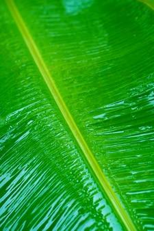 Krople deszczu na zielonym liściu bananowca w ogrodzie po deszczu